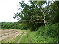 TL2080 : Track towards Monks Wood by Marathon