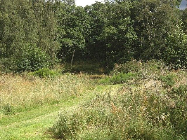 Angling Club pond