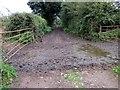 SJ3769 : Green Lane near Blacon by Jeff Buck
