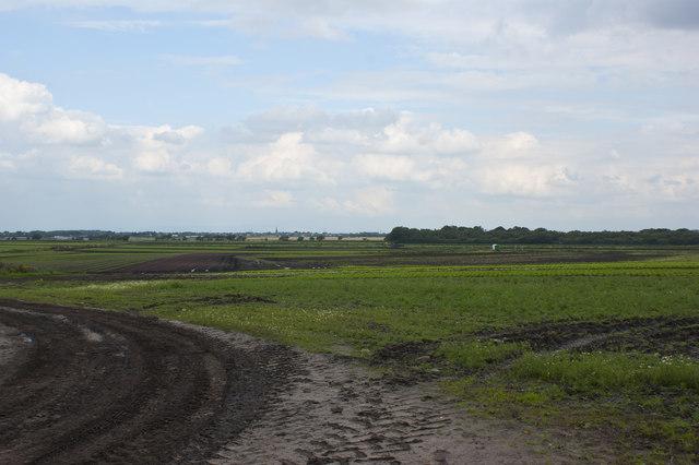 Holmeswood Moss and Hunter's Plantation