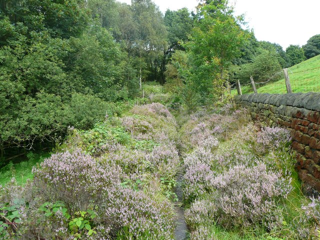 Footpath through heather east of Scout Bottom