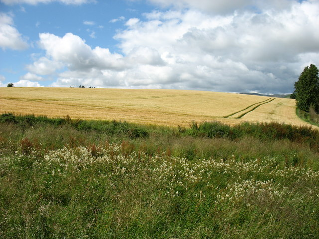 Fields at Gourdiehill