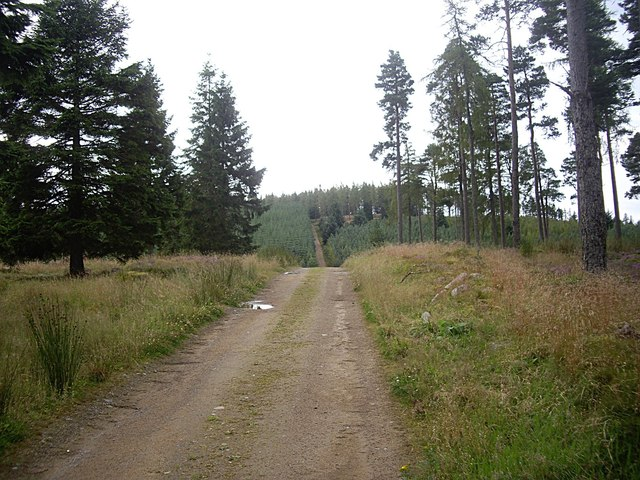 Forestry Track through Turk Wood