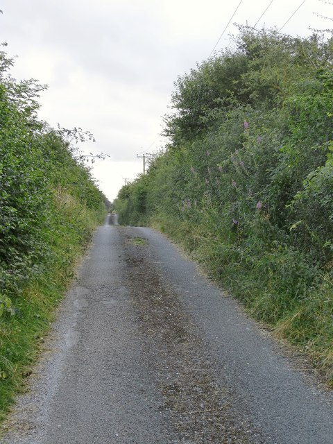 Lane leading uphill to Down Farm, Sixpenny Handley