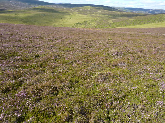 Two kinds of moorland - heather ( drier ) and grass ( boggy ).