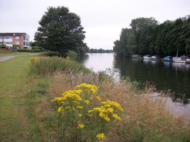 River Thames at Platt's Eyot