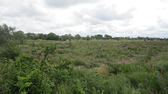 Cleared woodland, Ballygarveybeg