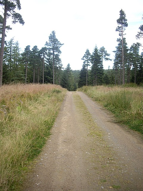 Forestry track in Turk Wood