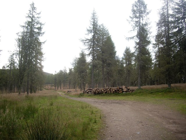 Log pile by a bend in the forestry track