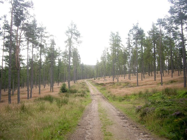 Track through Turk Wood