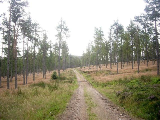 Track through Turk Wood