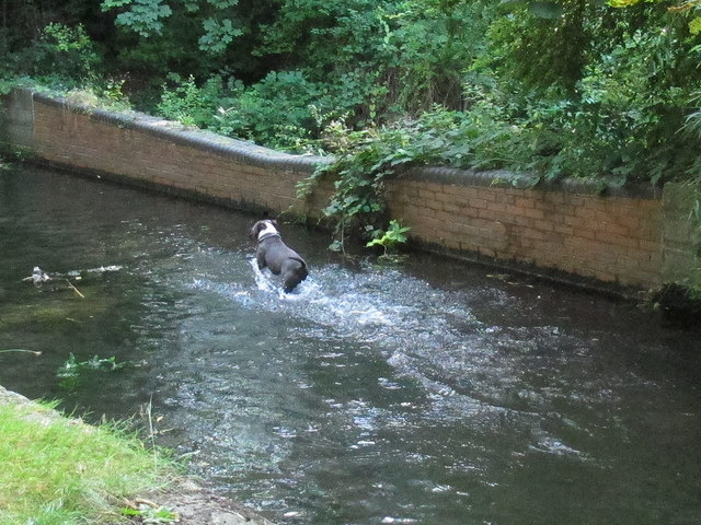 Dog in the Wandle