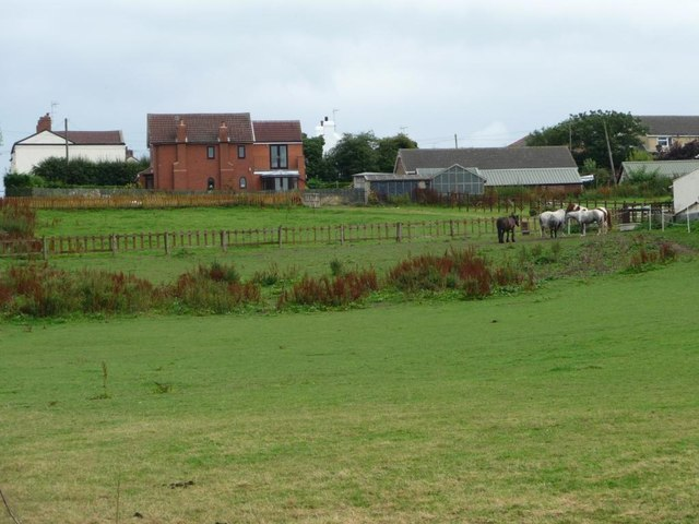 Horses grazing near Owlet Hall Farm