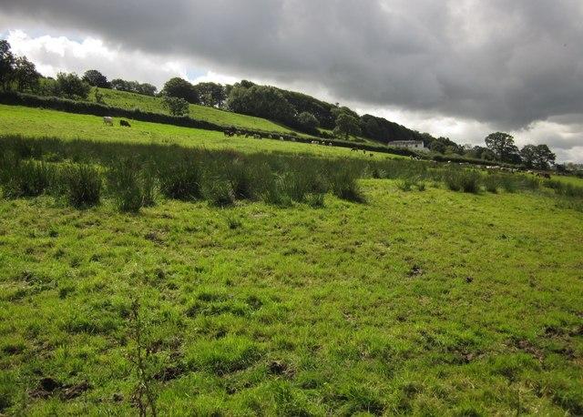Honiton Hill