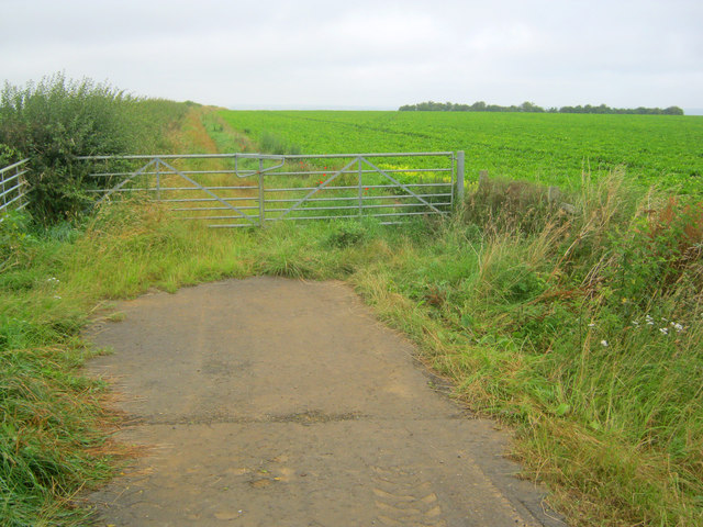 Field entrance at Waddington