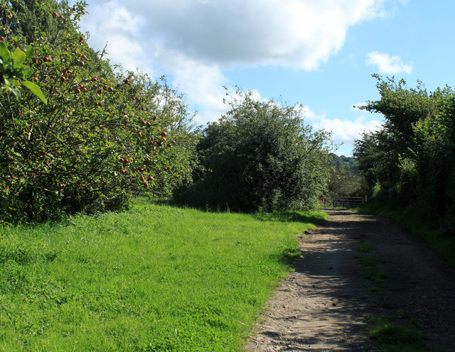 2012 : Corner of an orchard near Bishop Sutton