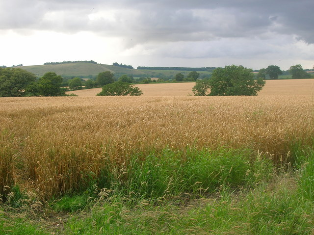 Wheat fields above Wootton Rivers