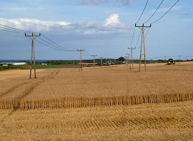 A wheat field at Wester Broomhouse