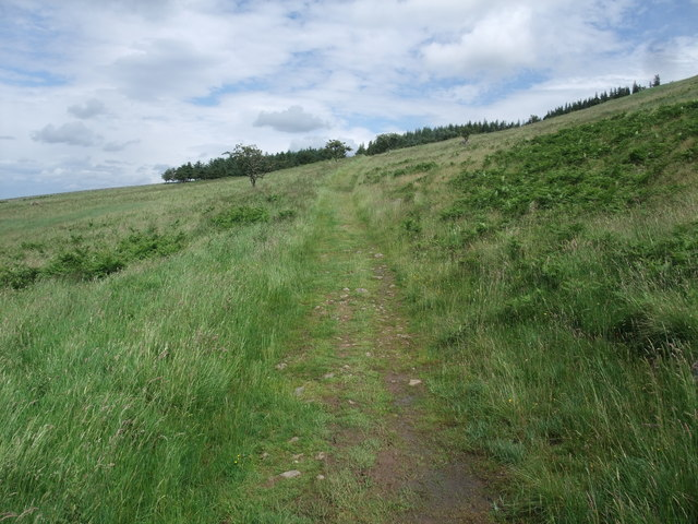 St Cuthbert's Way heading towards Torleehouse