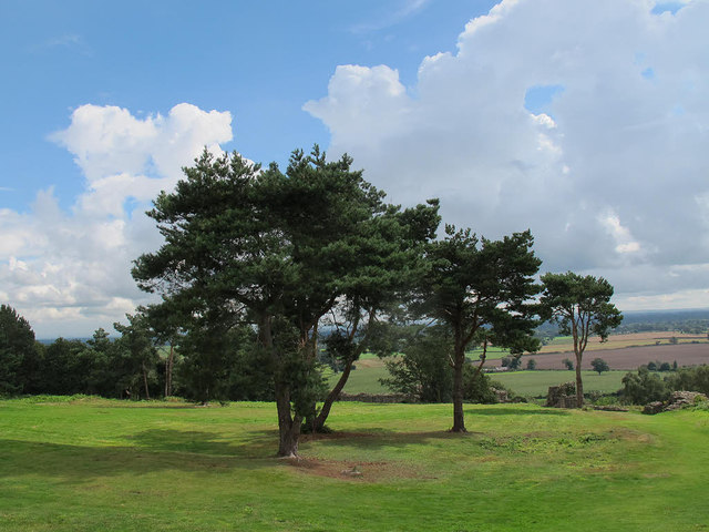 Beeston castle:pine trees