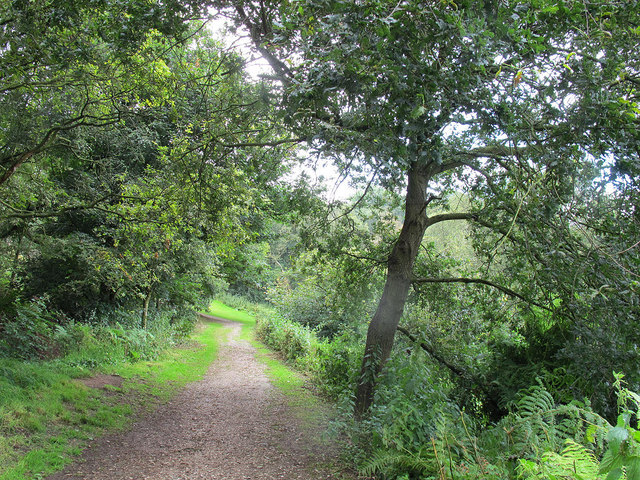 Beeston castle: path into the woods