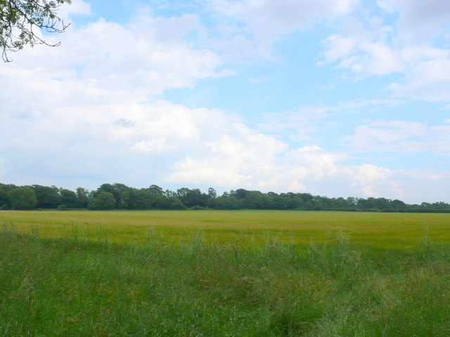 Field at Field Barn