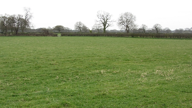 Grass field, Tabley Brook