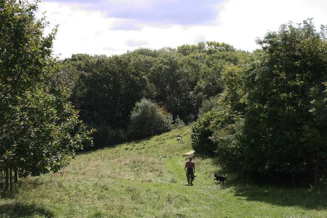 Henlade Wood