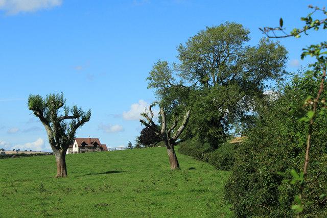 2012 : From a farm entrance on Denny Lane