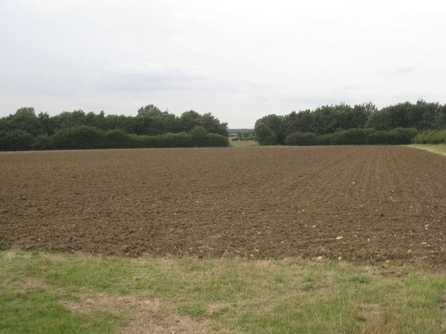 Gap in the plantation near Haceby