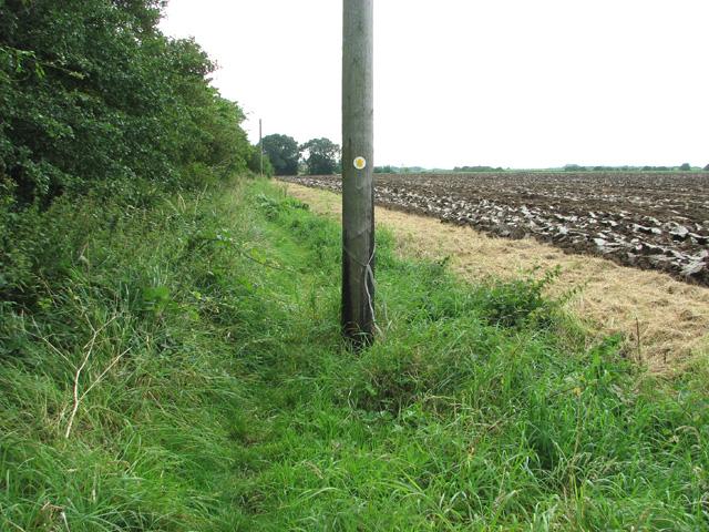 Footpath marker on telegraph pole, Watlington