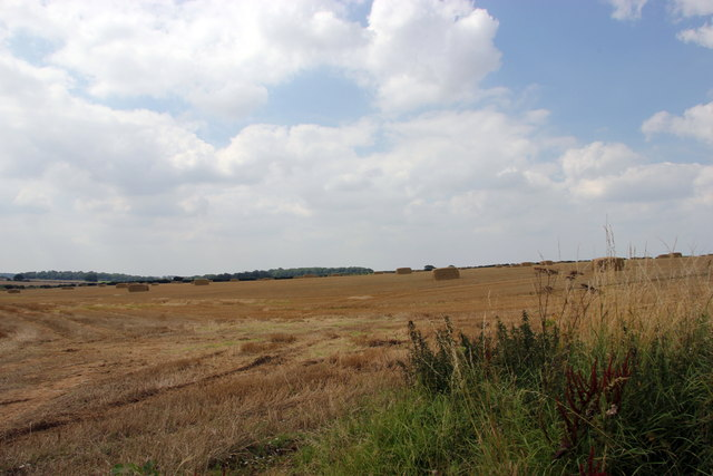 Harvested cornfield near Docking