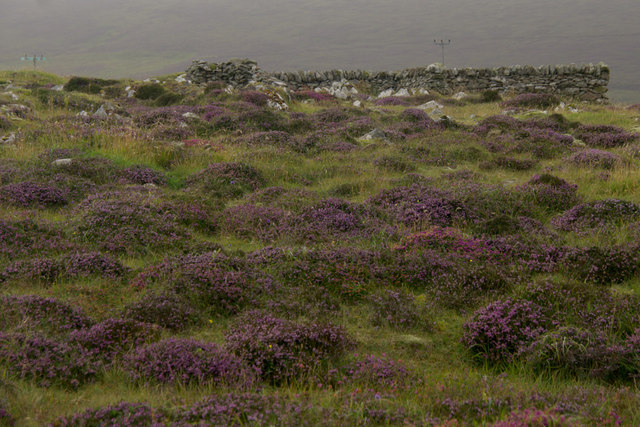 Heather near Watlee
