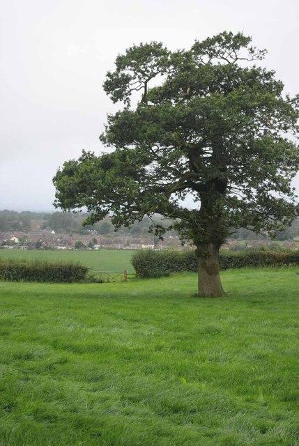 Footpath Near Madley