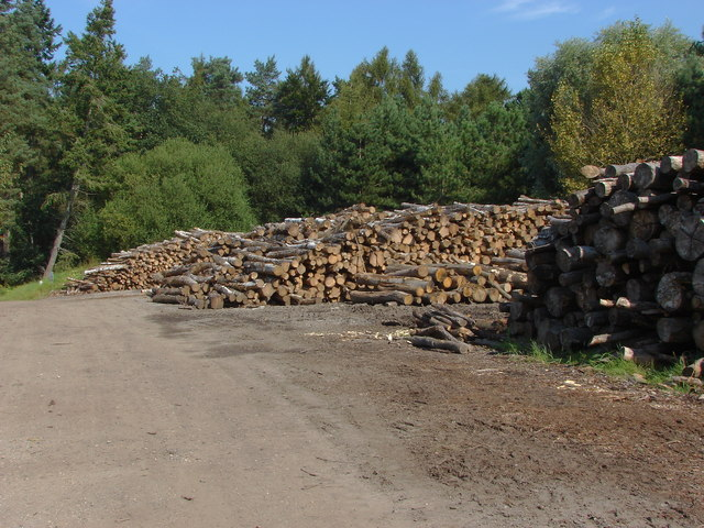 Log piles, Blane's Farm