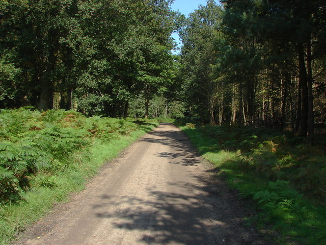 Woodland ride, Swinley Park