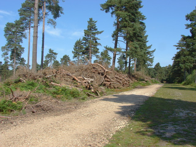 Forestry activity, Swinley park