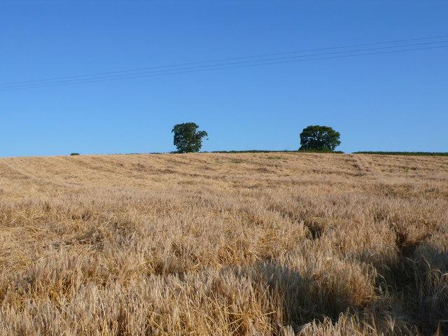 Mattock's Tree Hill