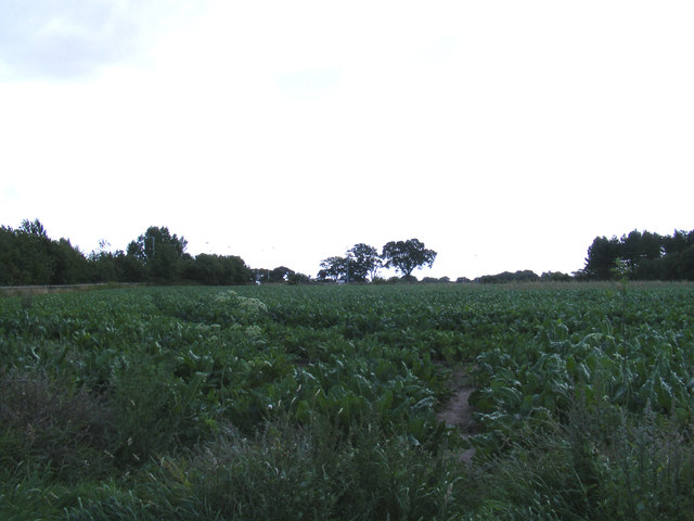 Nacton Fields