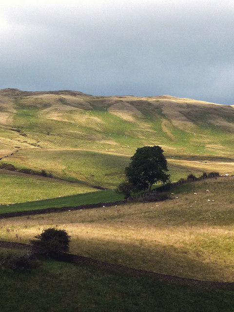 Sheep pastures near Cockin