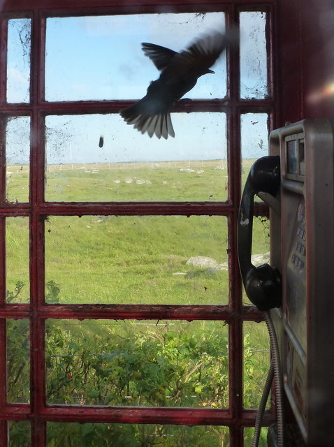 Baleshare: a bird trapped in a phone box