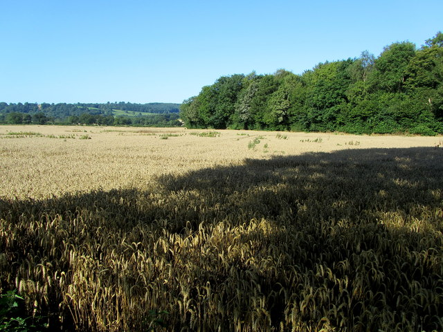 Field and Heslett Wood