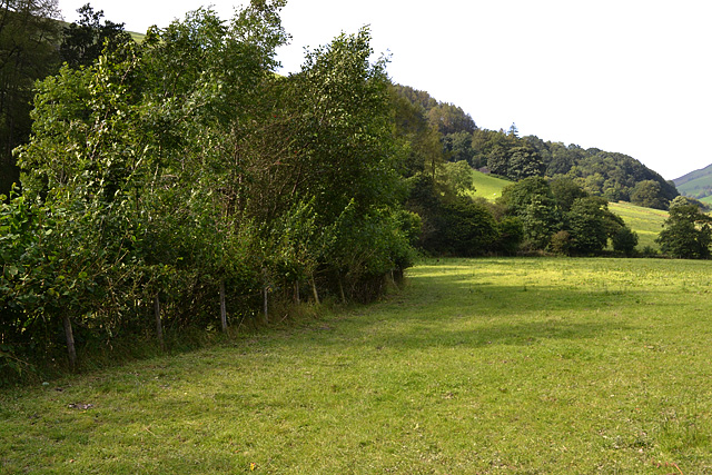 Field boundary in Cwm Tafalog