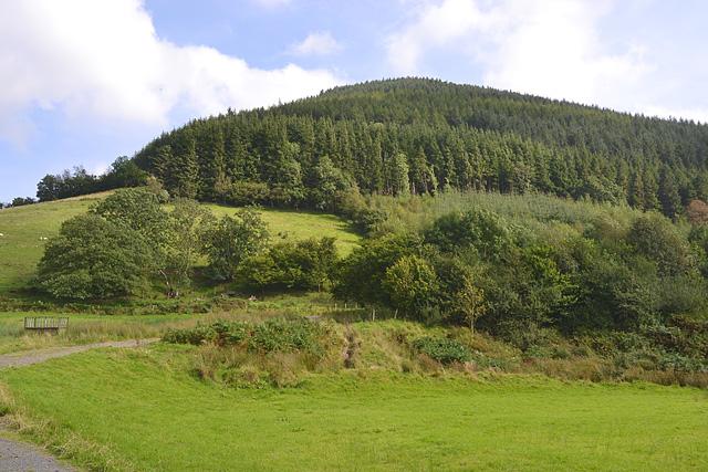 Forestry on Moel Groes-heol