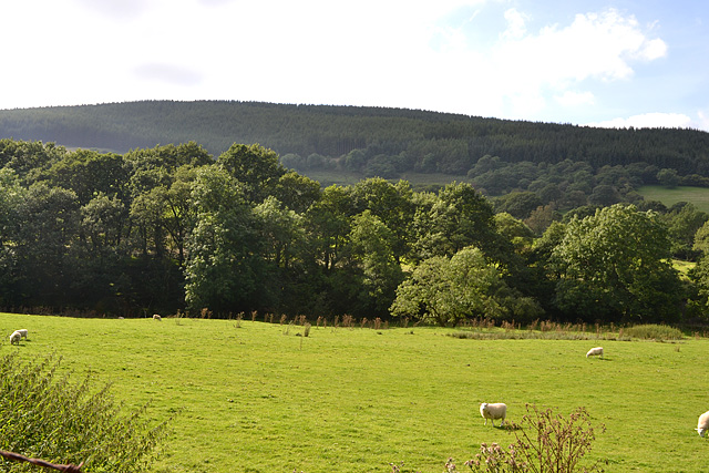 Field in Cwm Tafalog