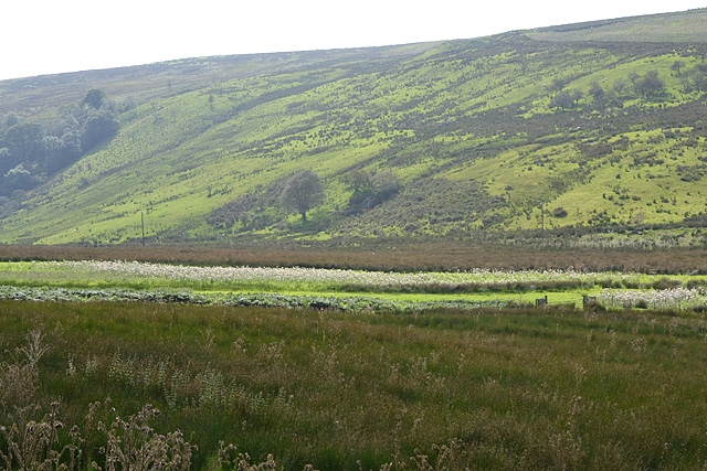 Damp moor at the head of Cwm Tafalog