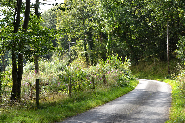 Minor road descending the Clegyrnant valley