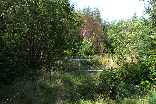 Gate into woodland
