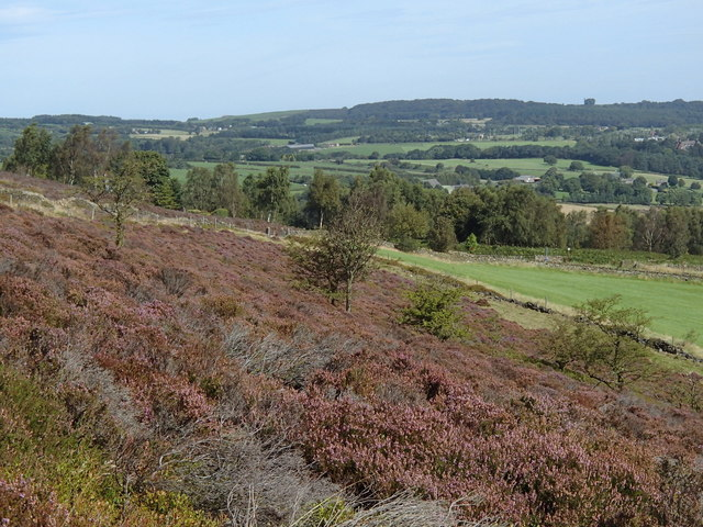 Heather moorland hillside