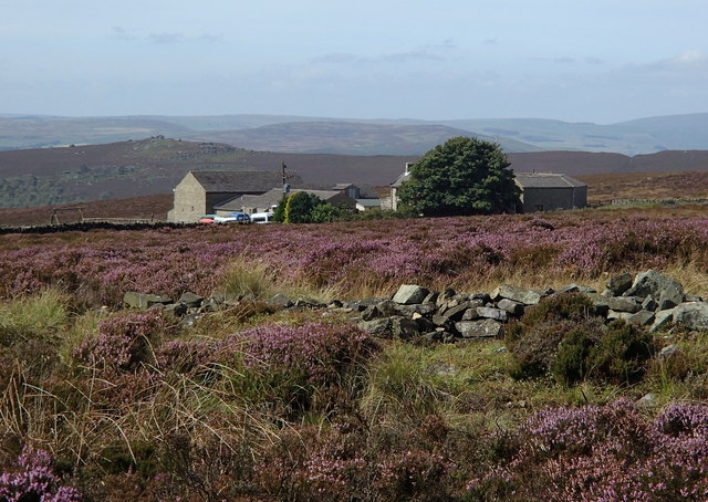 Heather moorland around Parson House